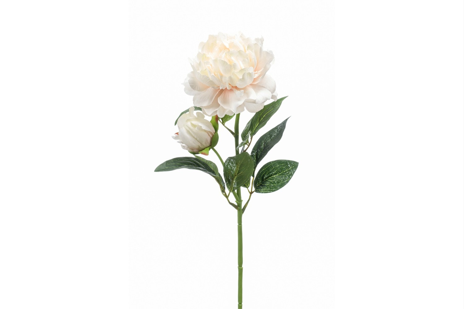 Peony Spray | Cream/Peach