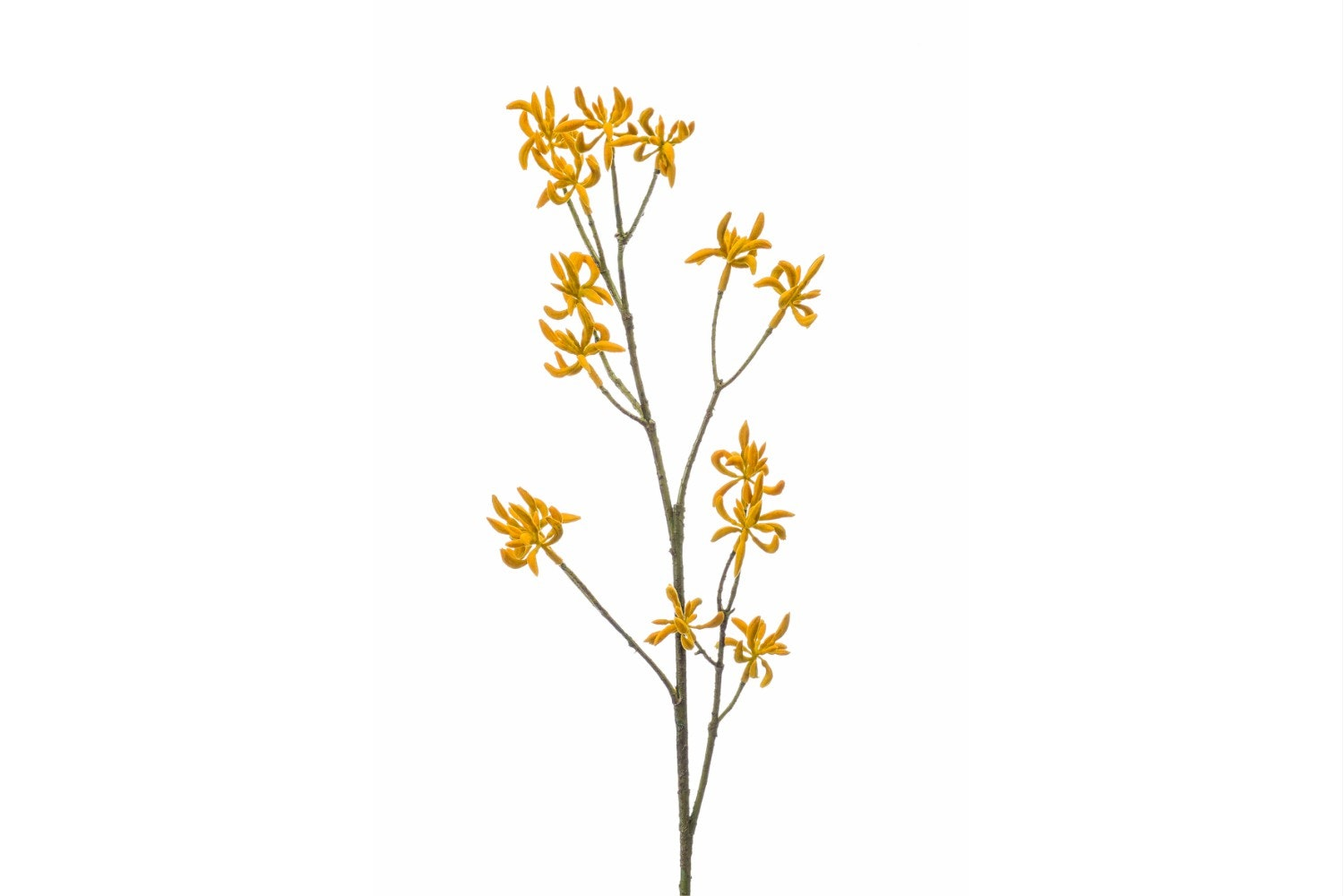 Anigozanthos Spray | Yellow | 68cm
