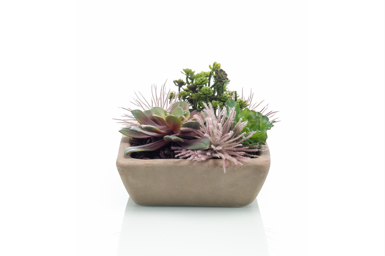 Succulent Mix In Terracotta Pot Square