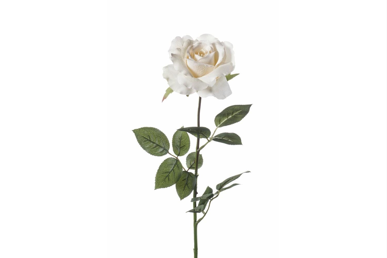 Rose English Cream