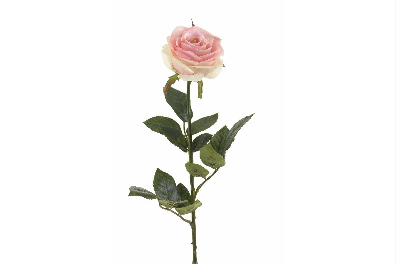 Rose Simone Pink