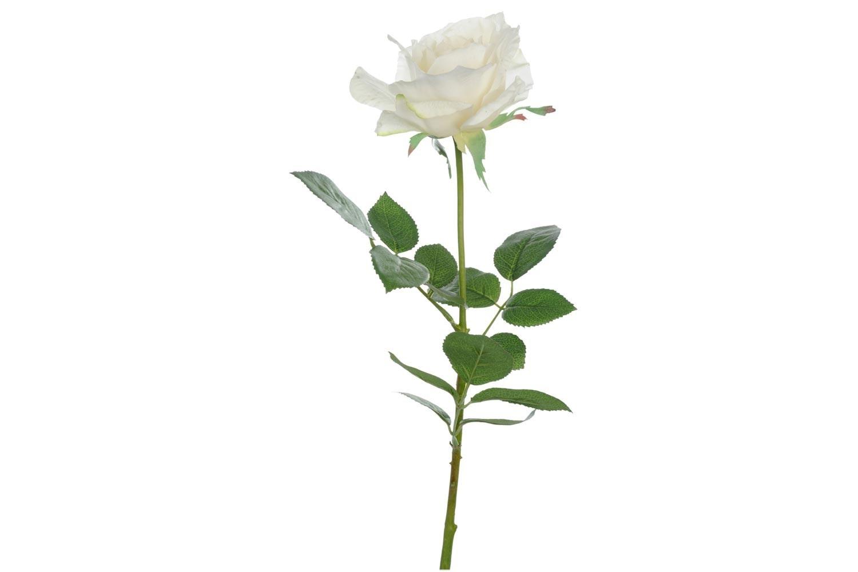 Rose Joey Fresh T White