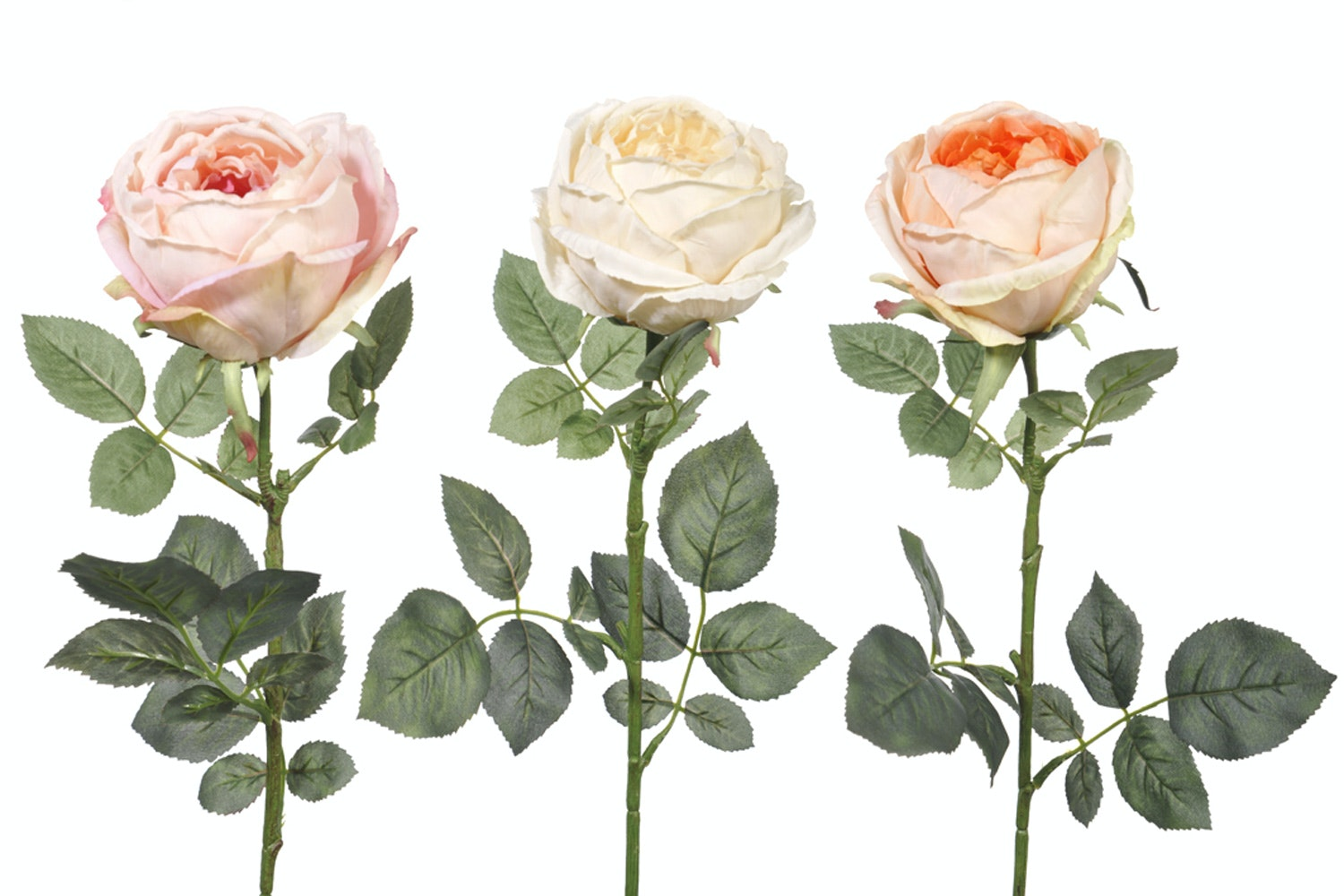 Pink and Cream Cabbage Roses | 3 Flowers