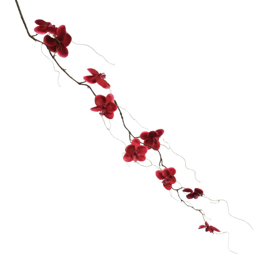 Dark Fuchsia Hanging Phalaenopsis