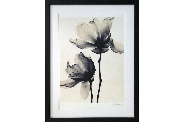 Saucer Magnolia Framed Print