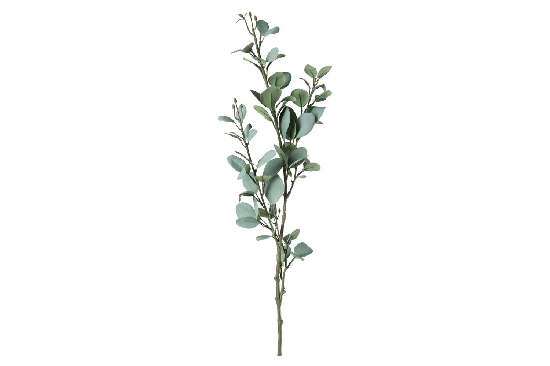 Branch Eucalyptus Leaf