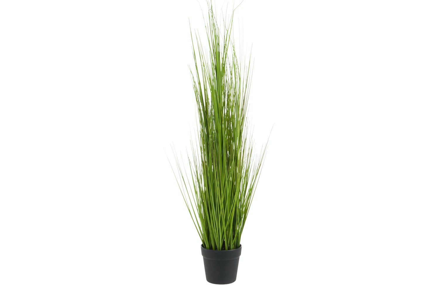 Tall Grass In Pot