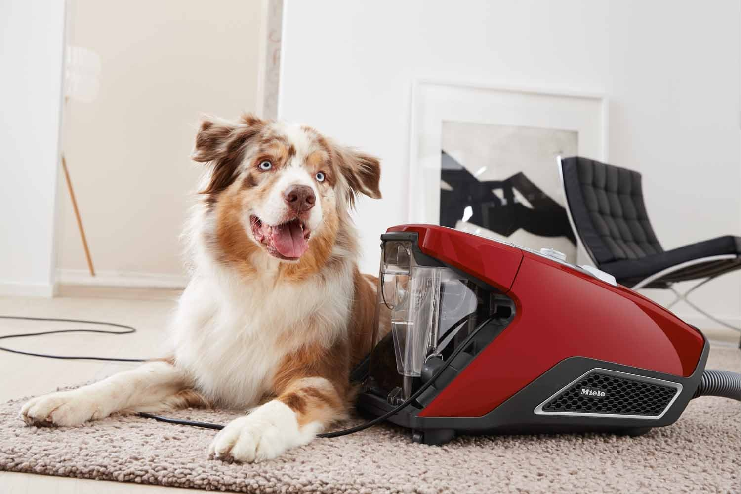 Blizzard CX1 Cat&Dog PowerLine SKCF3  Bagless Cylinder Vacuum Cleaners