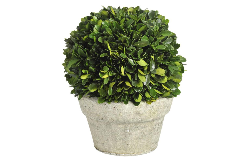 Buxus Green Ball Plant Pot | Medium