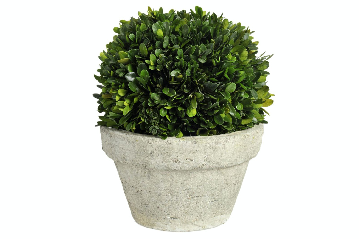 Buxus Green Ball Plant Pot | Large