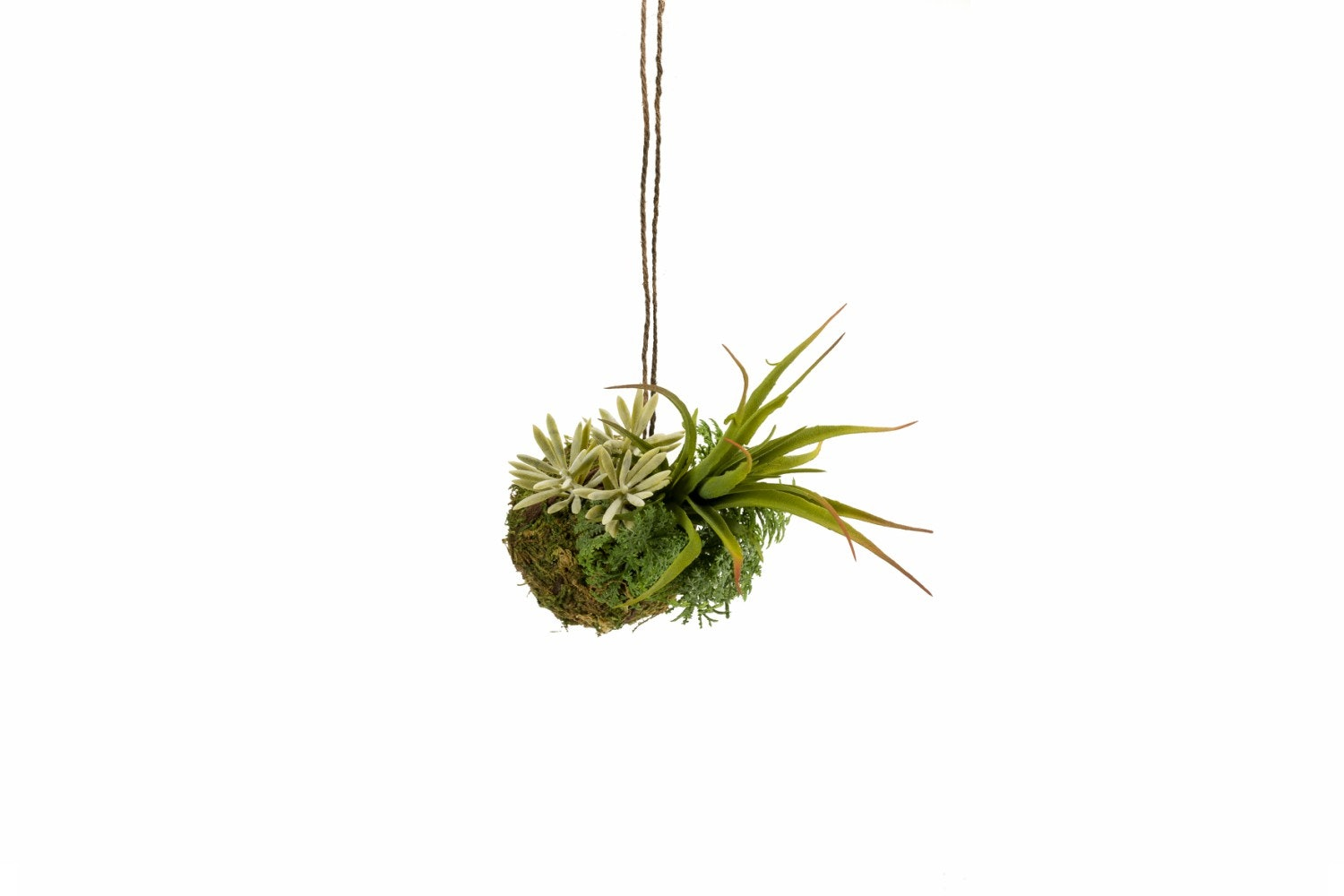 Succulent String Garden | Green | Small