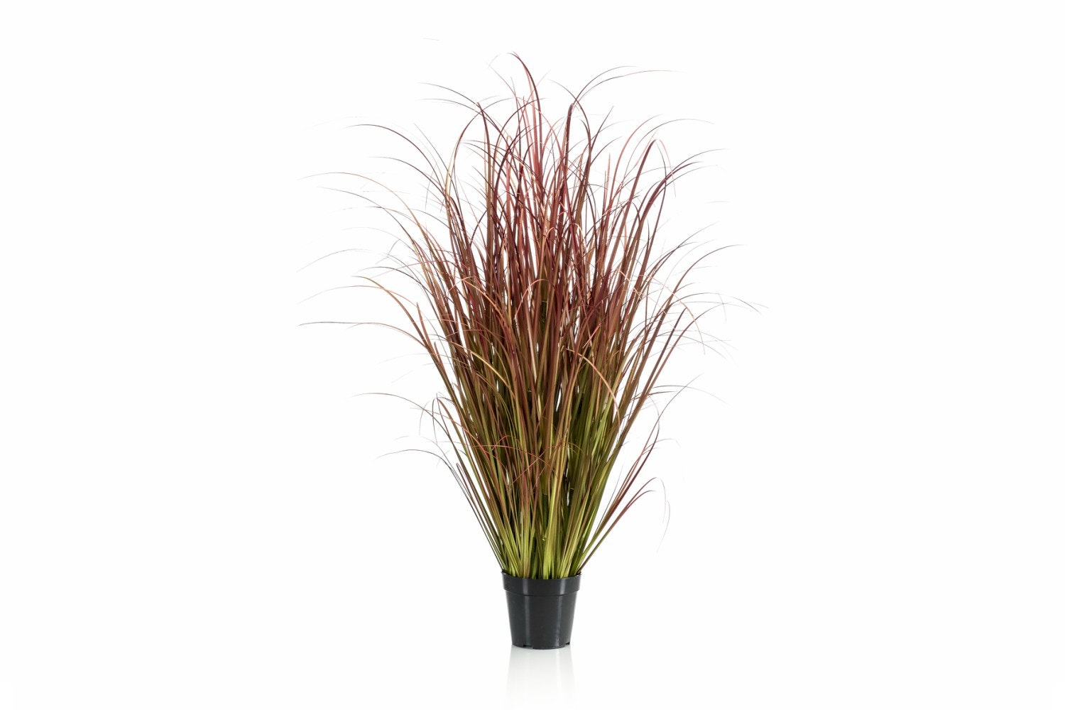 Autumn Grass In Pot