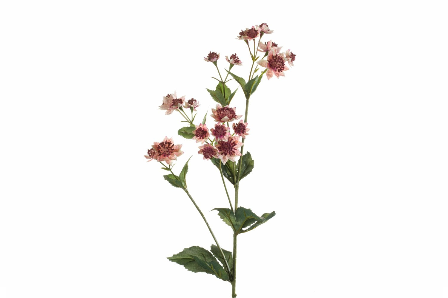 Astrantia Spray | Light Pink