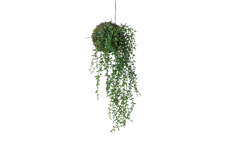 Senecio String Garden | Green