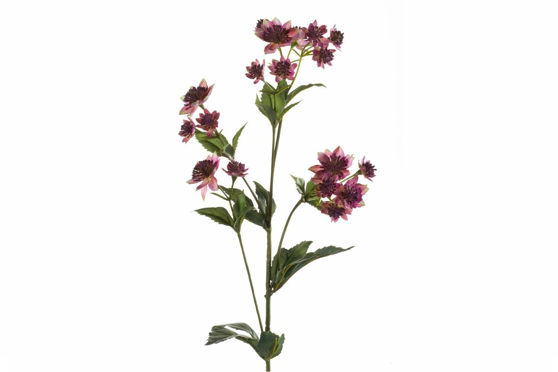 Astrantia Spray Purple