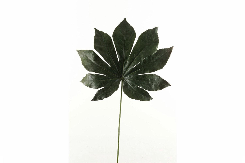 Fatsia Leaf   Dark Green