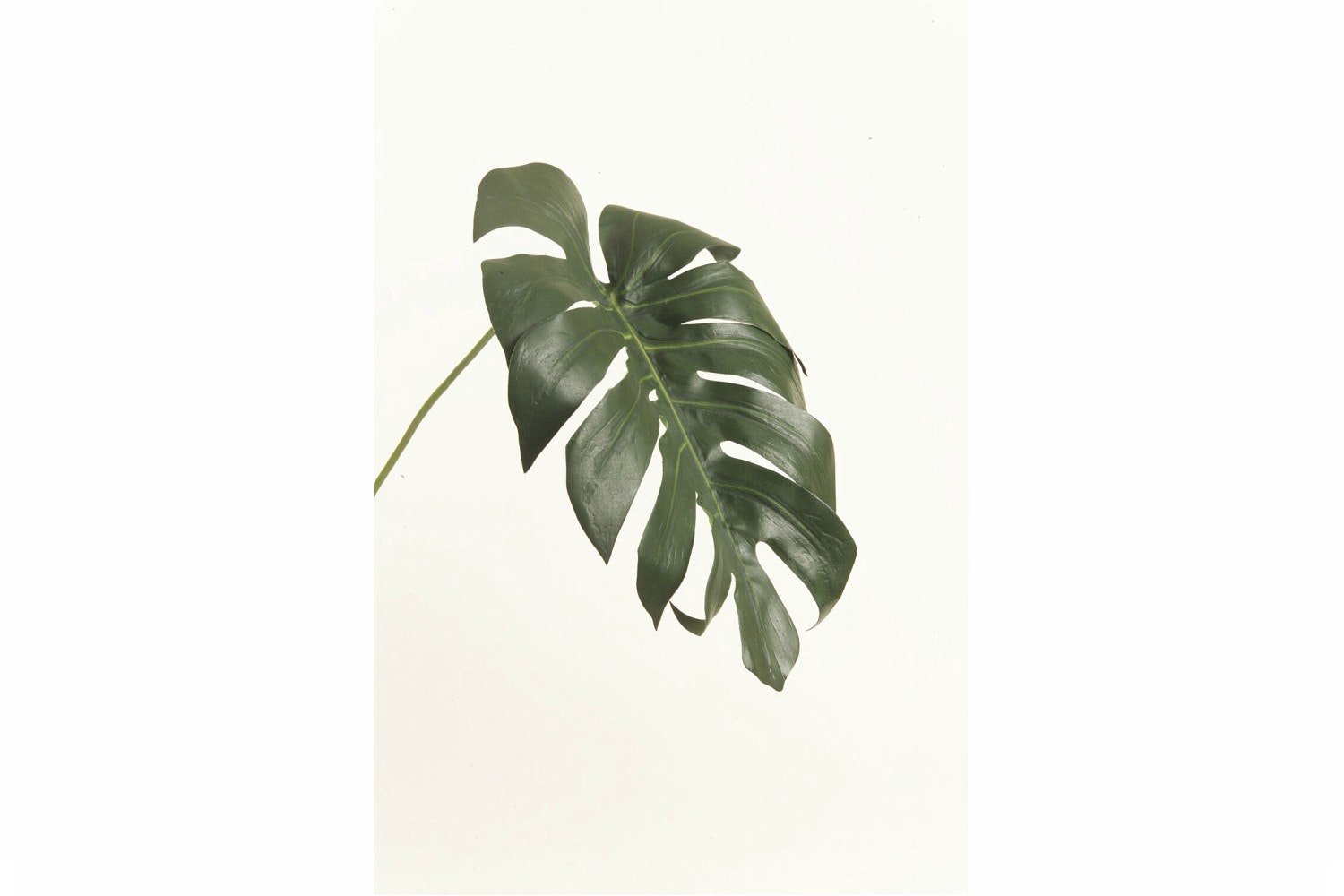 Monstera Small Leaf | Dark Green | 70cm