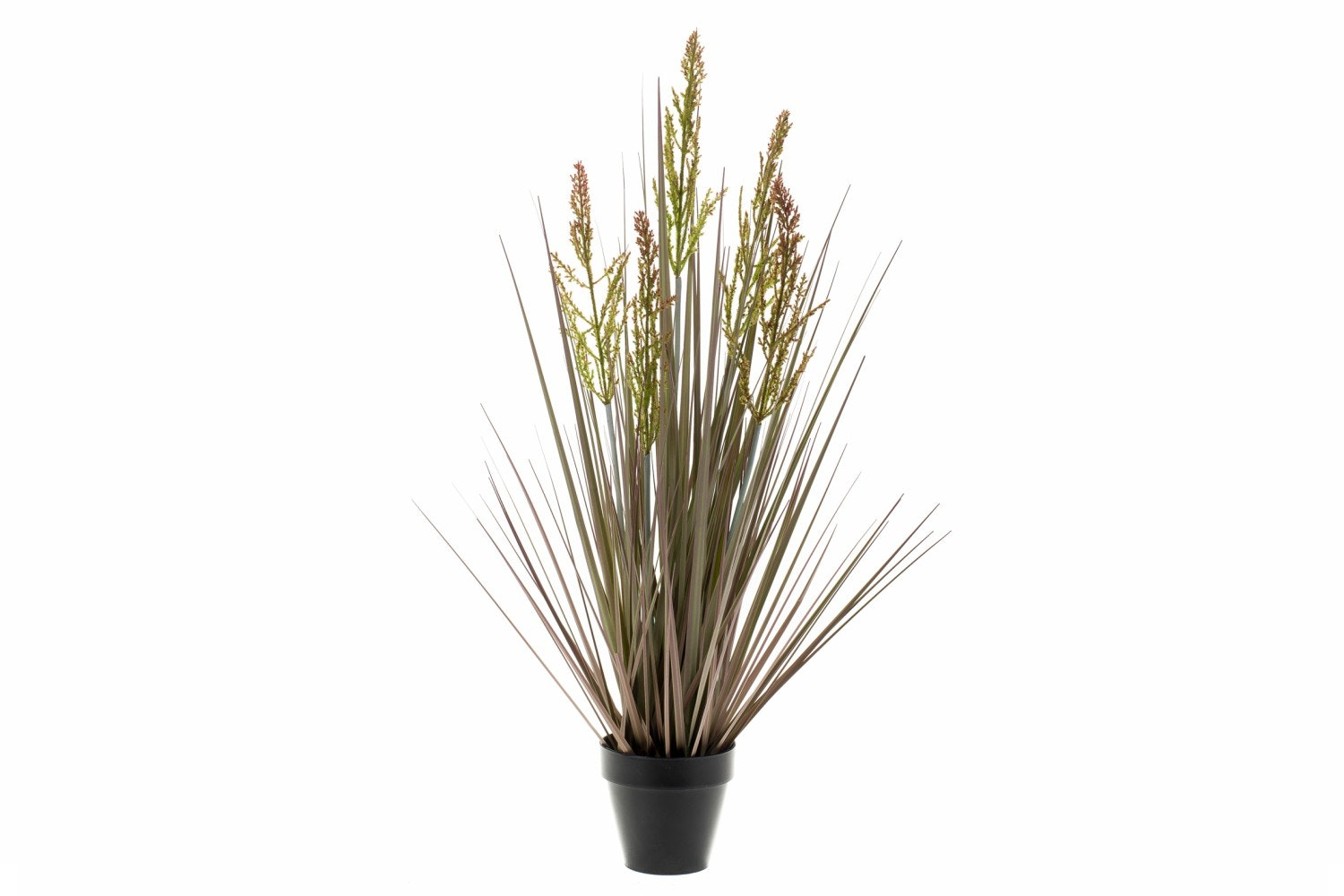 Rumex Grass In Plastic Pot | 53cm