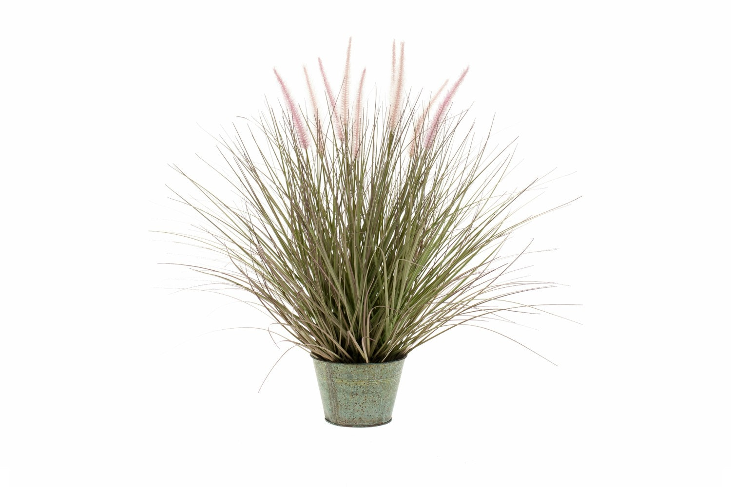 Pennisetum Grass In Zinc Pot