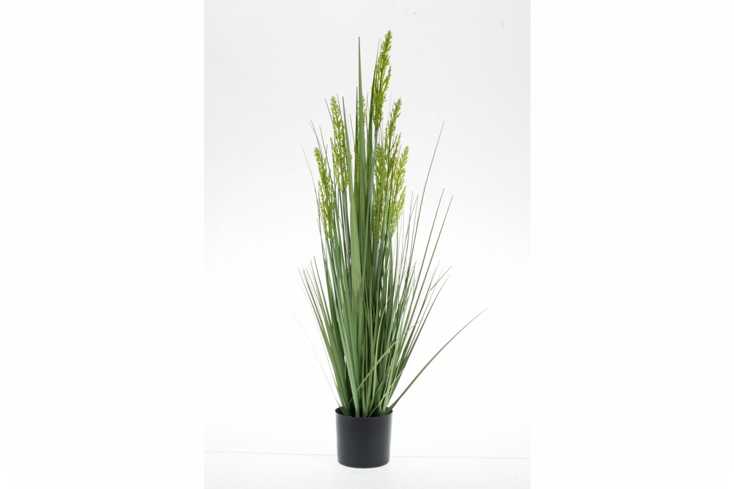 Grain Grass In Plastic Pot | 90cm