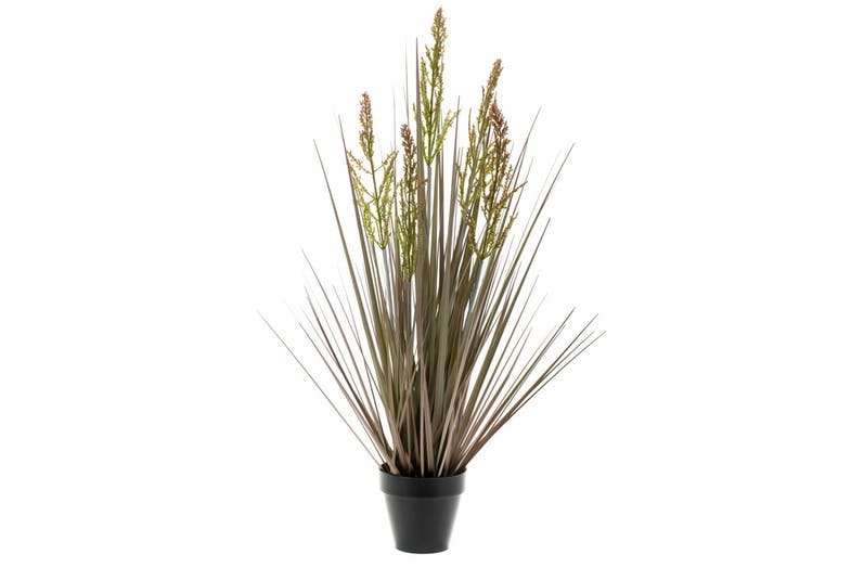 Rumex Grass In Plastic Pot | 69cm