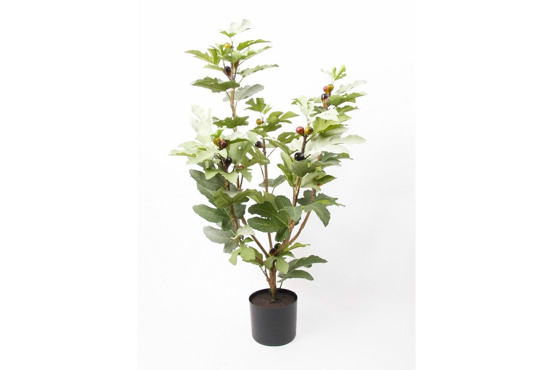 Fig Tree In Plastic Pot